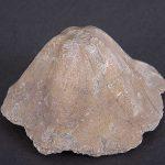 geolosko paleontoloska zbirka